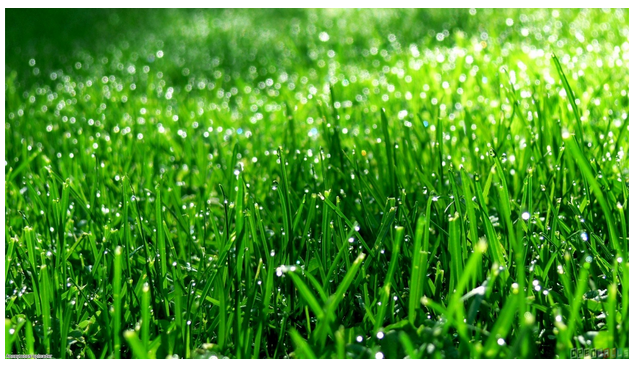 The grass is always greener over there. Can friendship change the way you take care of your lawn?🌱